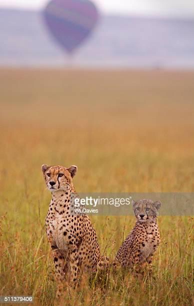 Cheetah and cub and balloon