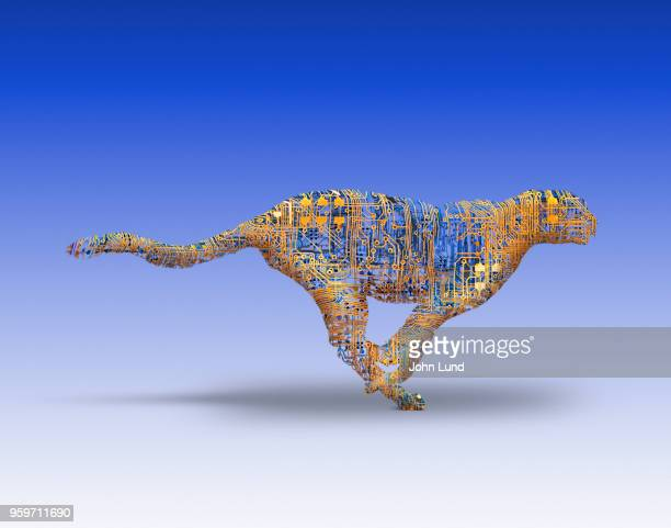 cheetah fast networks, connections and computers - john lund stock pictures, royalty-free photos & images