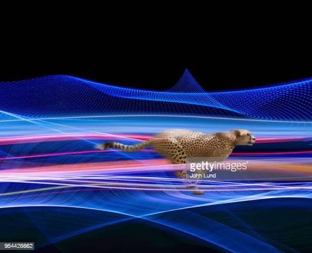 Cheetah Fast Streaming Data