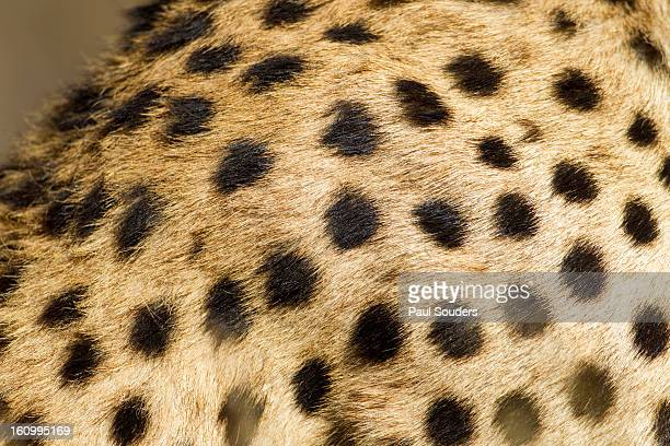 Cheetah Fur, Ndutu Plains, Tanzania