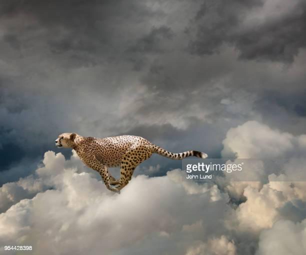 Cheetah Sprinting Through The Cloud