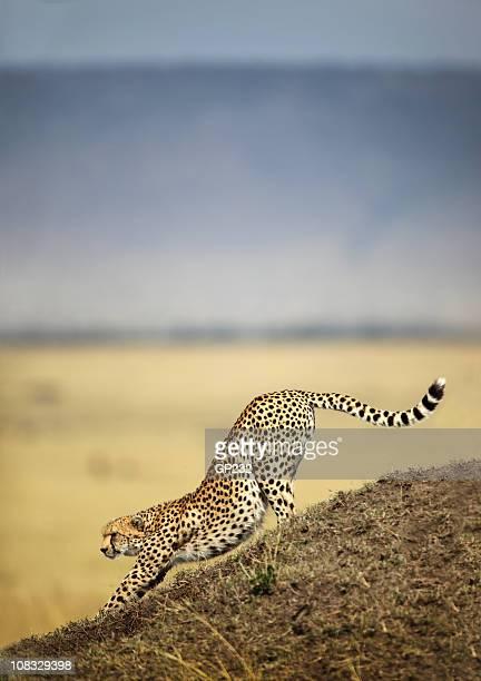 Gepard Dehnen