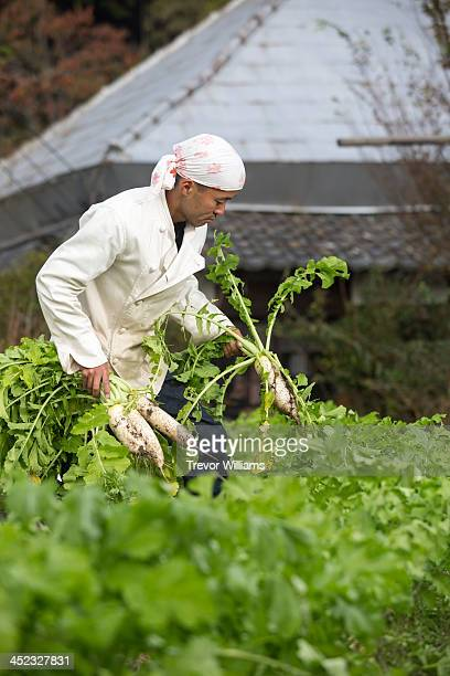 A chef pulling fresh vegetables from a garden
