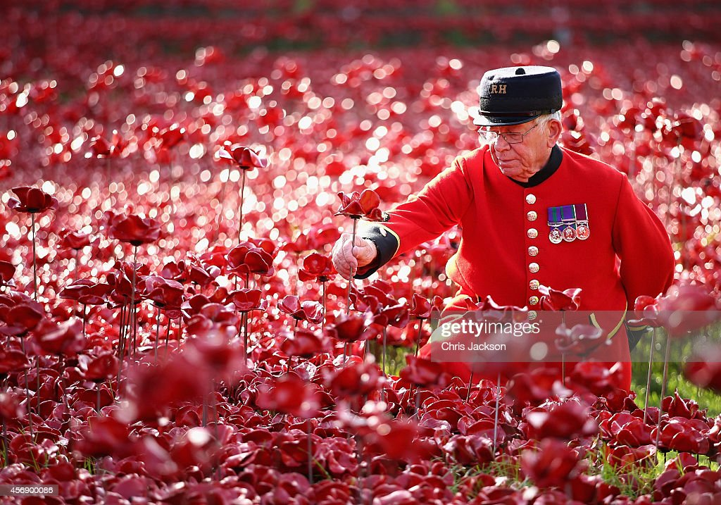 Chelsea Pensioner Albert Willis plants a poppy at the Blood Swept Lands and Seas of Red evolving art installation at the Tower of London on October 9, 2014 in London, England. 888,246 poppies will be planted in the moat by volunteers with the last poppy being planted on the 11th November 2014. Each poppy represents a British or Colonial fatality in the First World War. The poppies are for sale with 10% plus all net proceeds going to six service charities.