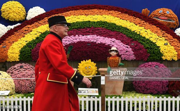A Chelsea pensioner walks past a display of chrysanthemums during the 2019 RHS Chelsea Flower Show in London on May 20 2019 The Chelsea flower show...