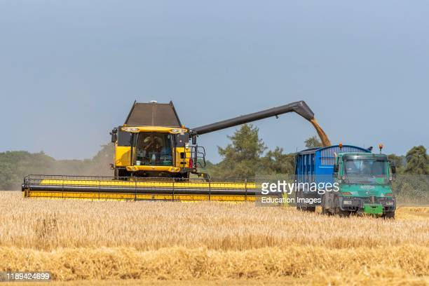 Cheltenham Gloucestershire England Combine harvester offloading harvested Barley into a tractor trailer via a unloading auger The barley after drying...