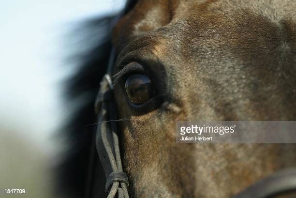 Cheltenham Gold Cup winning horse Best Mate at it's stables on March 14 2003 in Wantage