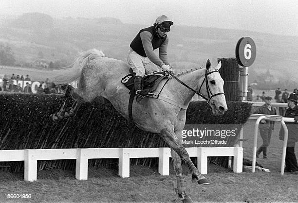 Cheltenham Races, Desert Orchid with Colin Brown up, finishes 3rd in a 2 mile steeplechase.