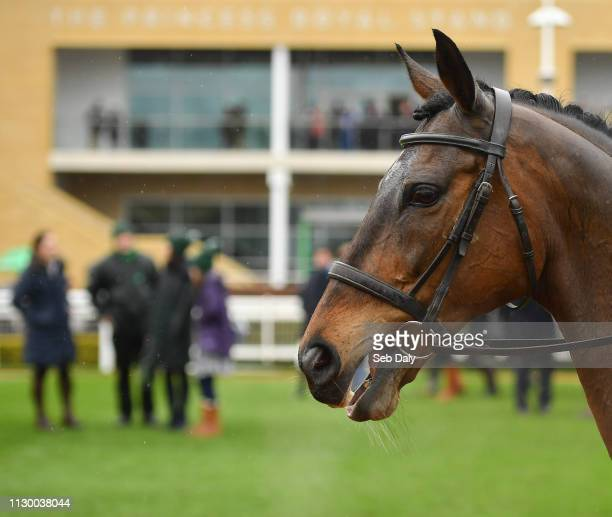 Cheltenham , United Kingdom - 12 March 2019; Zarkandar during the Retraining of Racehorses parade prior to racing on Day One of the Cheltenham Racing...