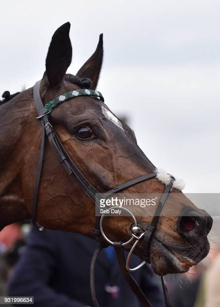 Cheltenham United Kingdom 14 March 2018 Altior after winning the Betway Queen Mother Champion Steeple Chase on Day Two of the Cheltenham Racing...