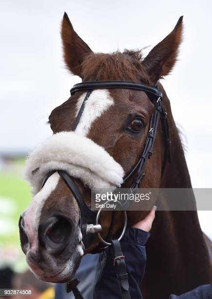 Cheltenham United Kingdom 16 March 2018 Native River after winning the Timico Cheltenham Gold Cup Steeple Chase on Day Four of the Cheltenham Racing...