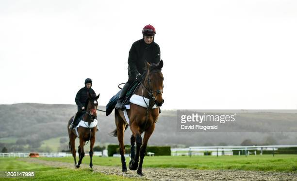 Cheltenham United Kingdom 9 March 2020 Honeysuckle trained by Henry de Bromhead on the gallops ahead of the Cheltenham Racing Festival at Prestbury...