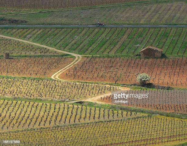 chemin de vignes - herault stock pictures, royalty-free photos & images