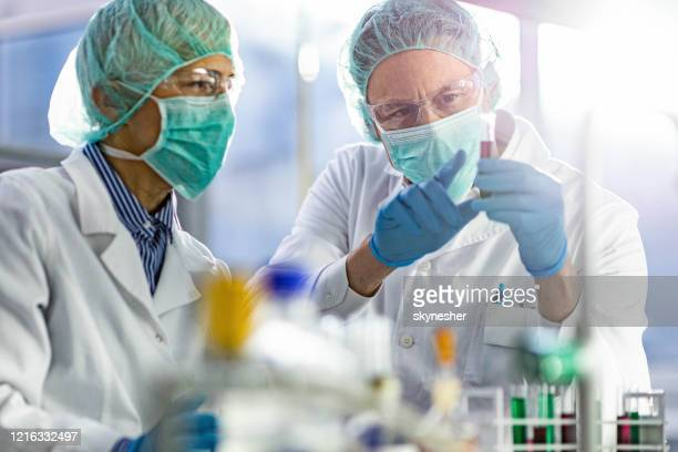 chemists cooperating while analyzing chemical substance in laboratory. - infectious disease stock pictures, royalty-free photos & images