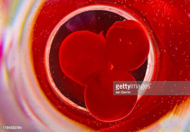 cherries in martini glass - ian gwinn stock pictures, royalty-free photos & images