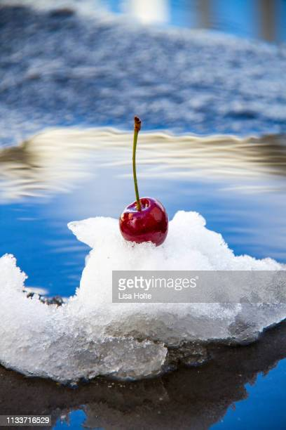 Cherries In The Snow