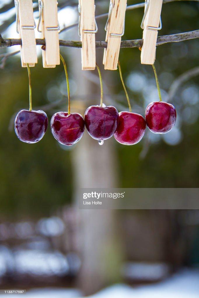 Cherries In The Snow : Stock Photo