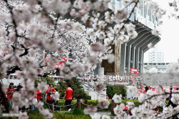 Cherry blossms are in full bloom at the studium prior to the JLeague J2 match between Nagoya Grampus and Kamatamare Sanuki at Paroma Mizuho Stadium...