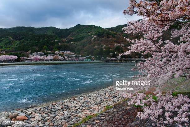 cherry blossom along a river in kyoto - arashiyama stock pictures, royalty-free photos & images