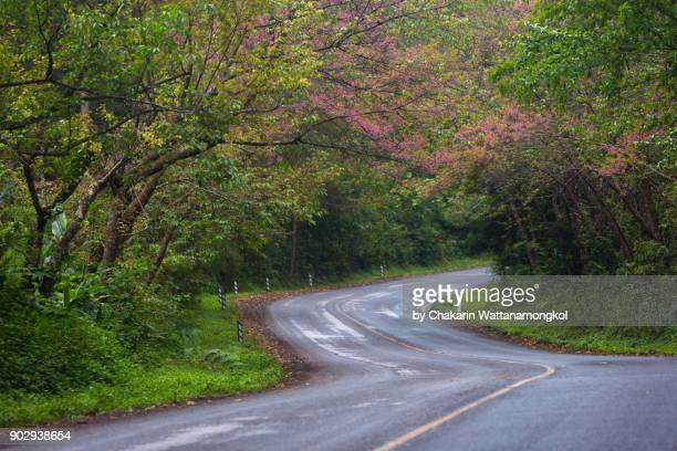Cherry Blossom and Curved Road.