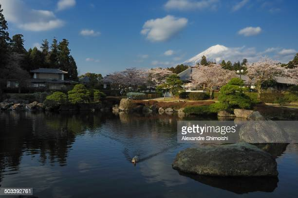 CONTENT] Cherry blossom and Mt Fuji Japanese symbols