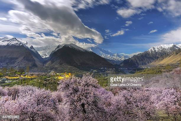 cherry blossom at night hunza valley north pakistan. - hunza valley stock pictures, royalty-free photos & images