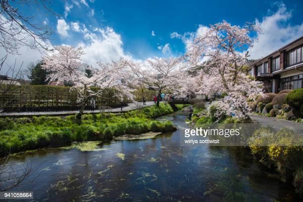 cherry blossom at oshino hakkai - 山梨県 ストックフォトと画像