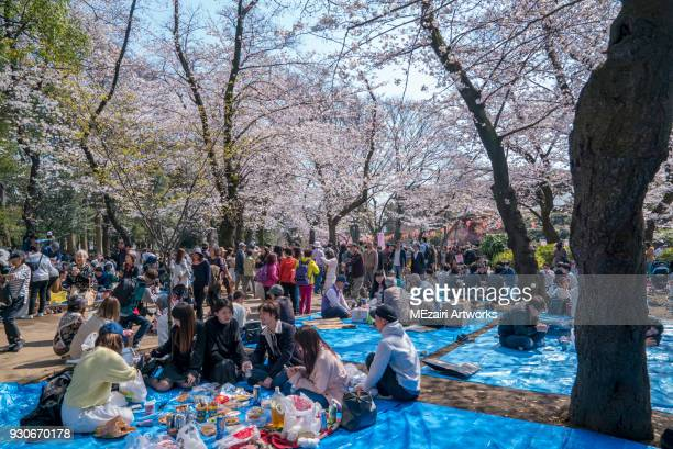 cherry blossom at ueno park, tokyo - hanami stock pictures, royalty-free photos & images