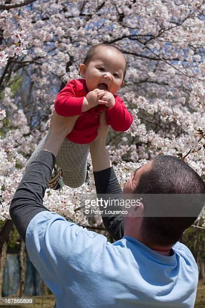 Cherry blossom baby