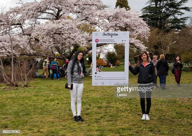 Cherry blossom fesitval in Queen Elizabeth Park, Vancouver, Canada