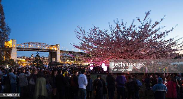 Cherry Blossom festival 2014 on a gorgeous, clear night in Vancouver with the Burrard Street bridge in the background.