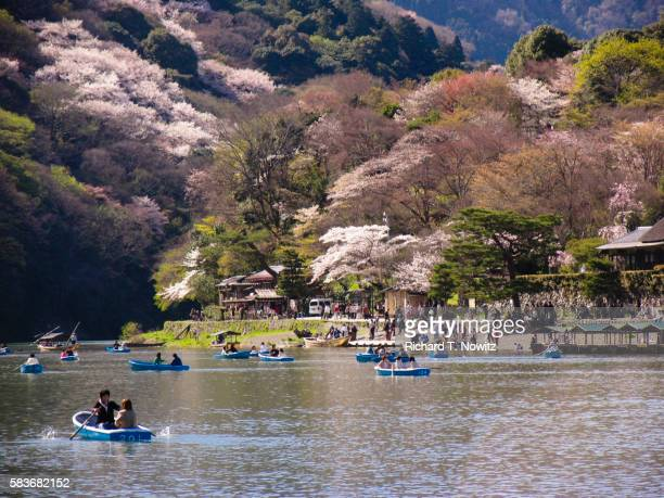 cherry blossom festival at kamo river in kyoto - arashiyama stock pictures, royalty-free photos & images