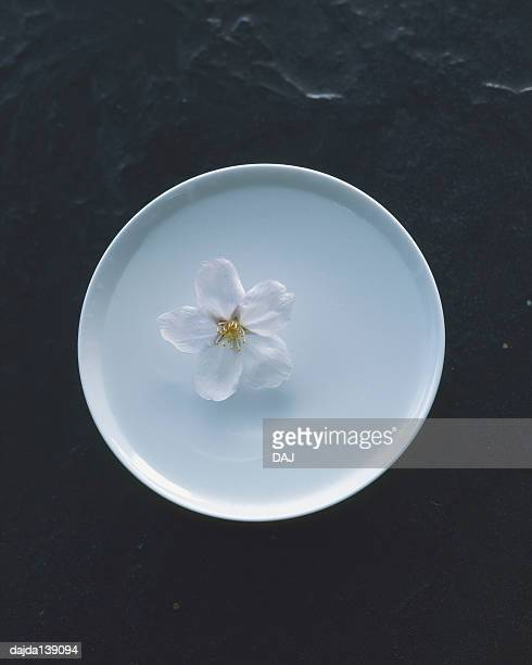 Cherry blossom floating on the sake cup