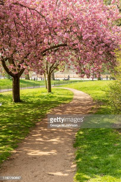 cherry blossom i - springtime stock pictures, royalty-free photos & images