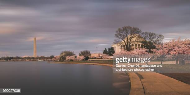 Cherry Blossom in D.C.
