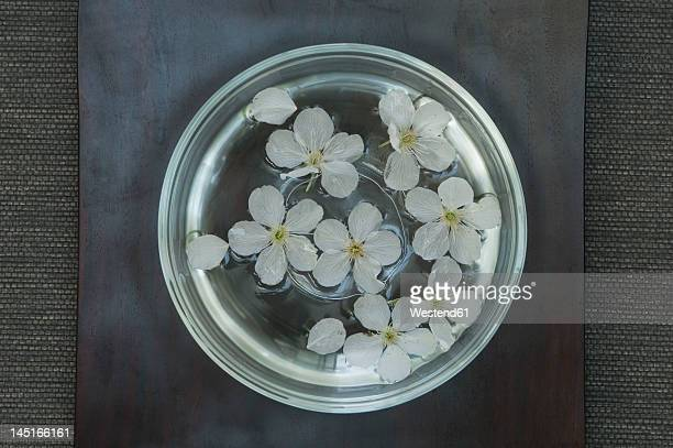 Cherry blossom in glass bowl