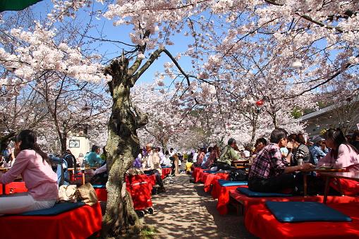 Cherry blossom in Japan - gettyimageskorea