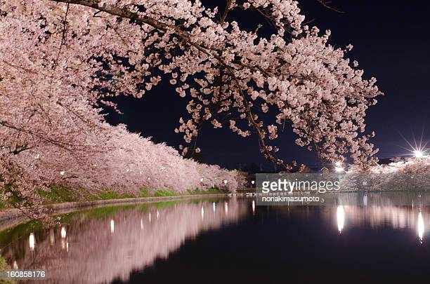 cherry blossom inside the river - hirosaki stock pictures, royalty-free photos & images