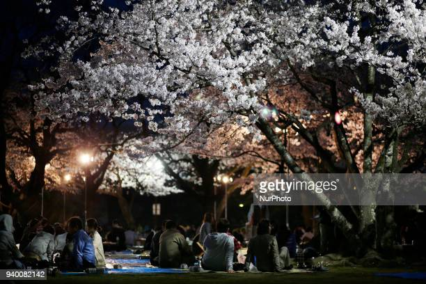 Cherry blossom is pictured in on March 29 2018 in Tokyo Japan The Japanese have a longheld tradition of enjoying the blooming of cherry blossoms...