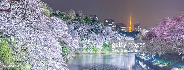 Cherry Blossom light up from Chidorigafuchi