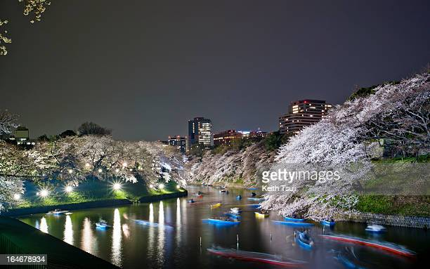 Cherry blossom night viewing at Chidorigafuchi Park Cherry blossoms are in full bloom in Tokyo Japan on March 22 2013 The blossom season has arrived...