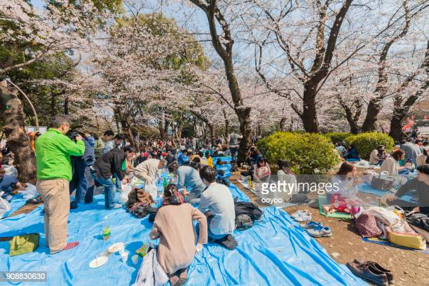 cherry blossom party or a hanami in ueno park, tokyo, japan - hanami stock pictures, royalty-free photos & images