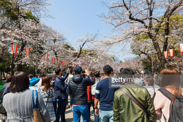 cherry blossom party or a hanami in ueno park, tokyo, japan - ueno park stock photos and pictures