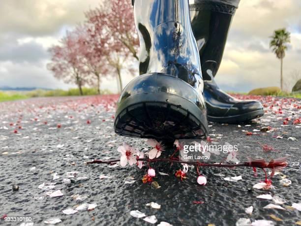 cherry blossom petals on the floor - レインブーツ ストックフォトと画像