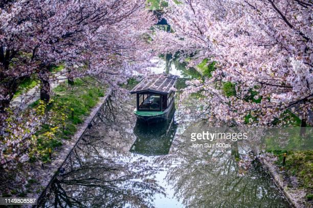 cherry blossom - 四月 ストックフォトと画像