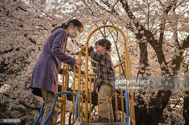 cherry blossom - playtime - peter lourenco stock pictures, royalty-free photos & images