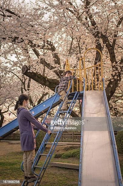 Cherry blossom playtime