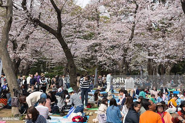 cherry blossom season at ueno park, tokyo, japan - ueno park stock photos and pictures