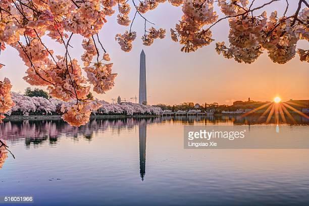Cherry Blossom Sunrise in Washington DC