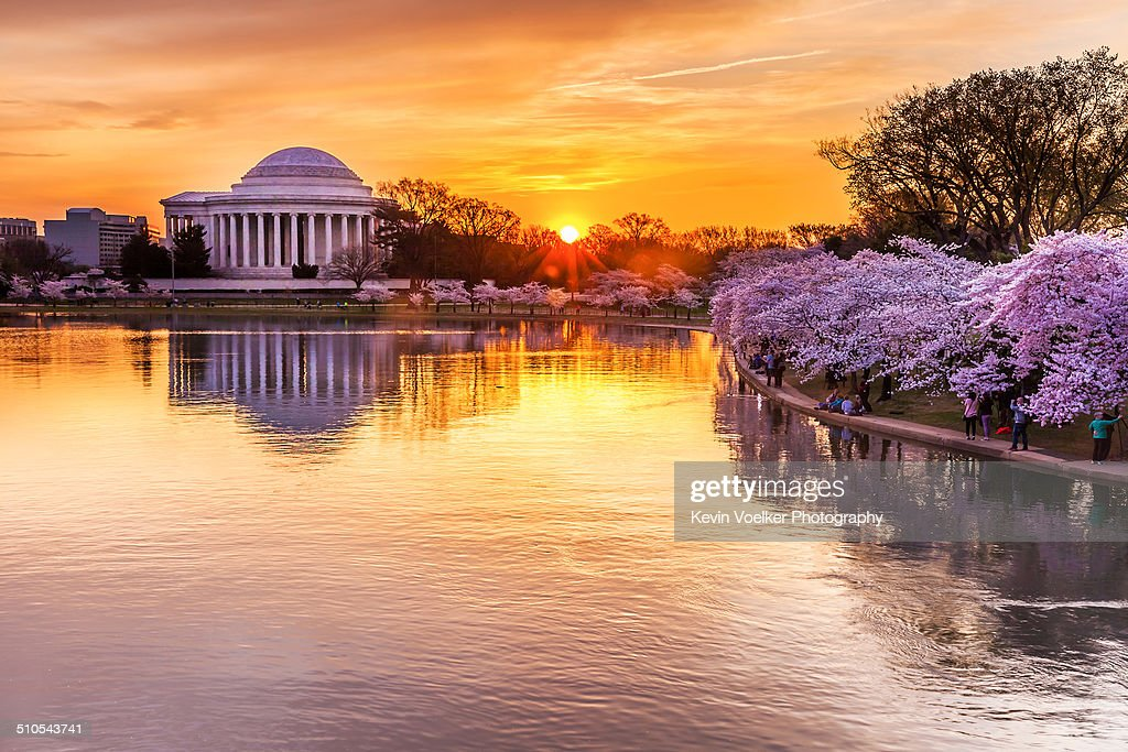 Cherry blossom sunrise : Stock Photo